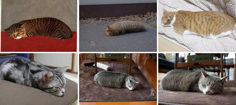 なまこみたいな猫たちの寝姿