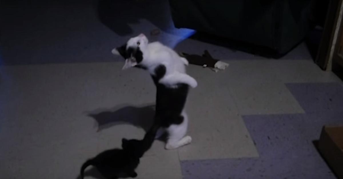 猫のイナバウアー!!!