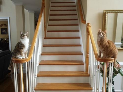 狛犬のような2匹の猫達。