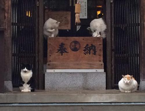 4匹もの狛猫!