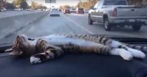 ドライブを楽しみすぎてる日向ぼっこ子猫
