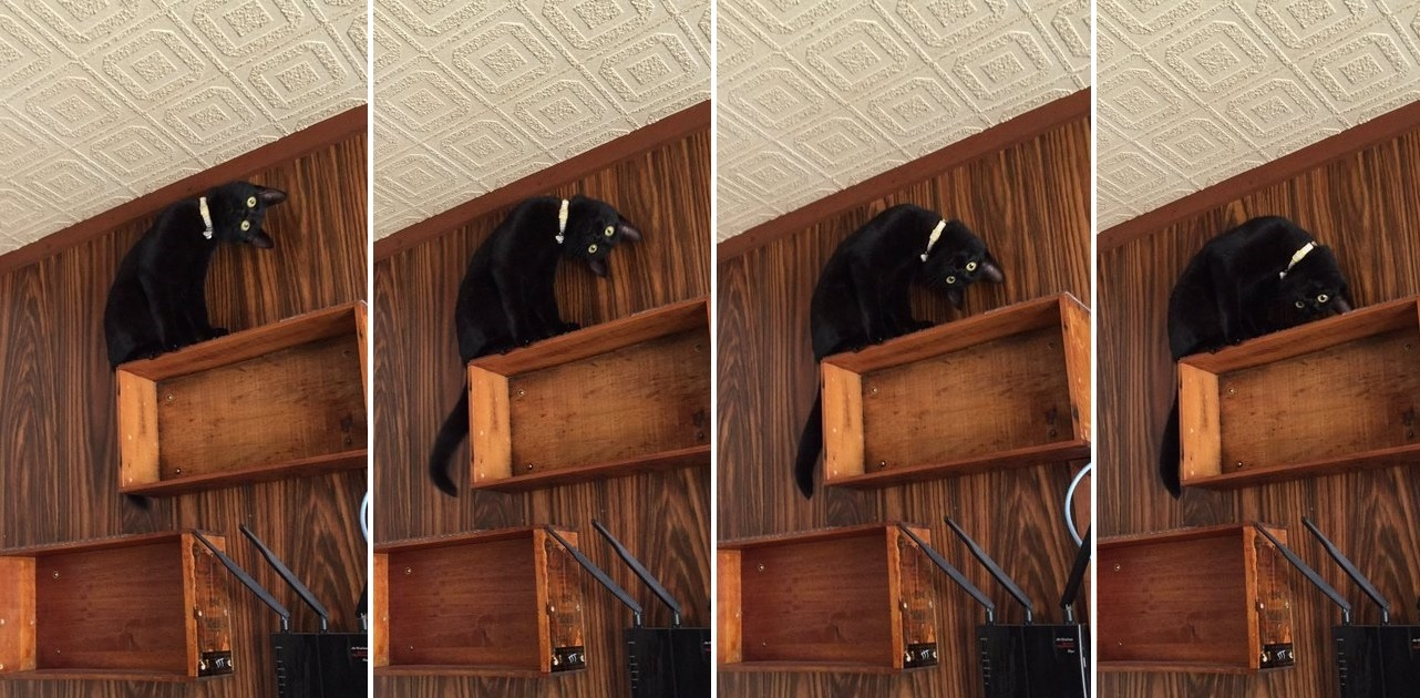 首をかしげまくる猫