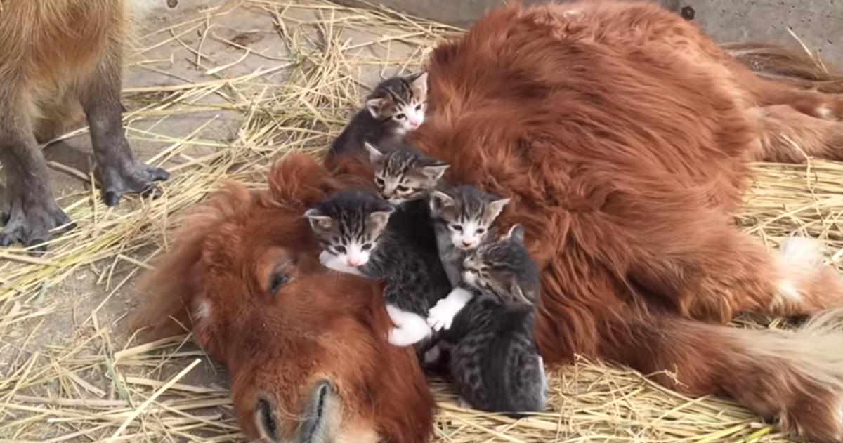スエトシ牧場の子猫たち。