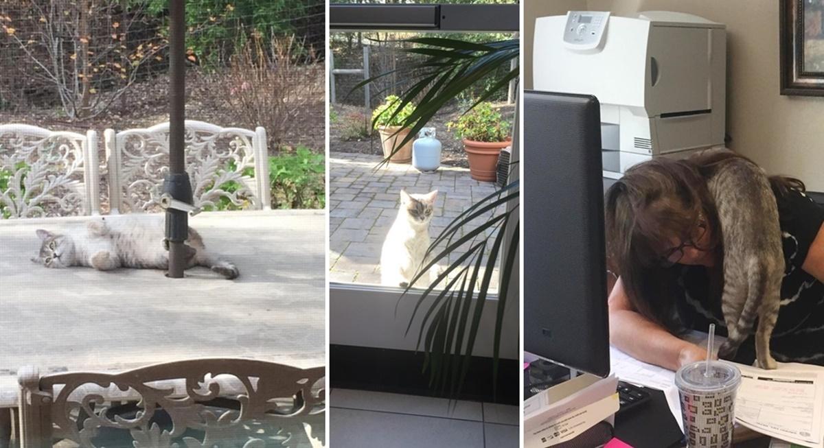 オフィス猫になった野良猫。