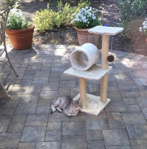 庭にはサーシャ専用キャットタワー。