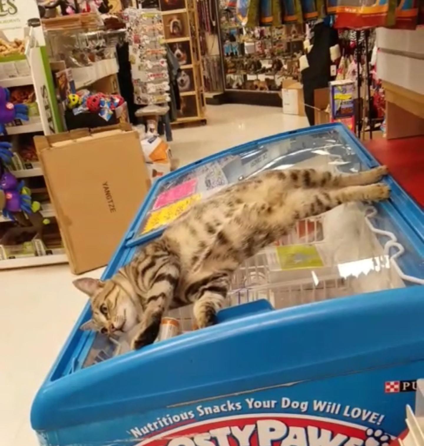 お店の冷蔵庫で寝る猫。