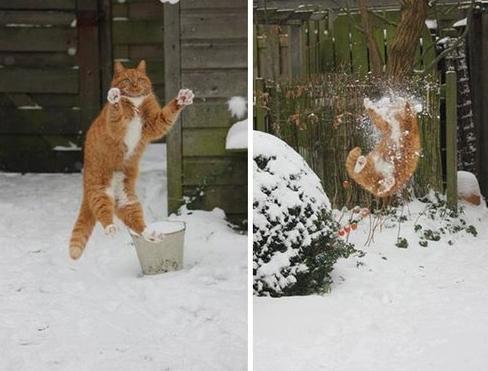 雪合戦、キャッチ失敗猫