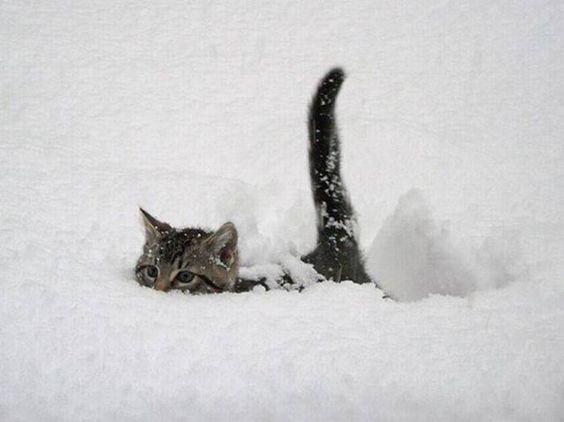 雪の海を進む子猫サメ。