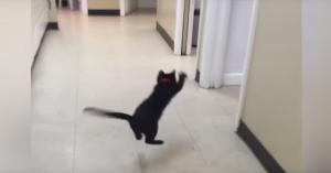 ピンポン玉になる子猫