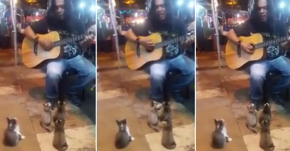 路上ライブを聞く子猫達