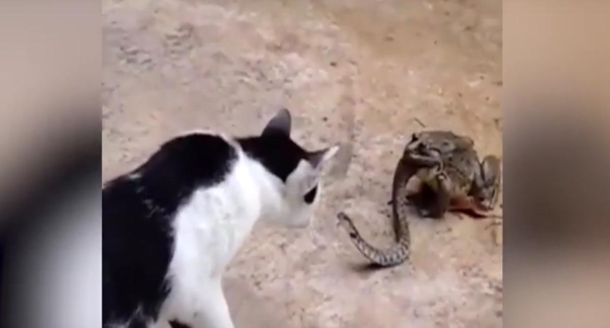 猫とヘビとカエル