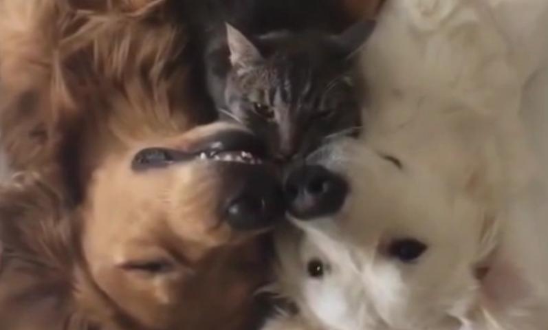 猫と2匹の犬のお昼寝動画