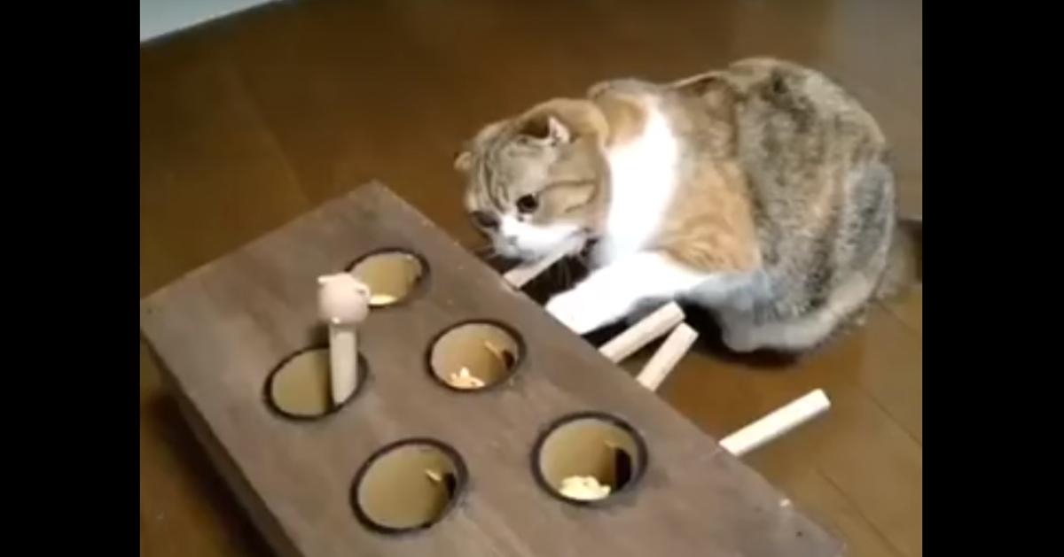 セルフモグラ叩きを楽しむ猫。