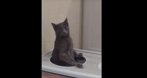 トイレを立ってする猫