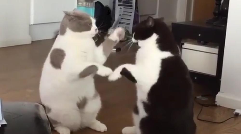 猫の手遊び