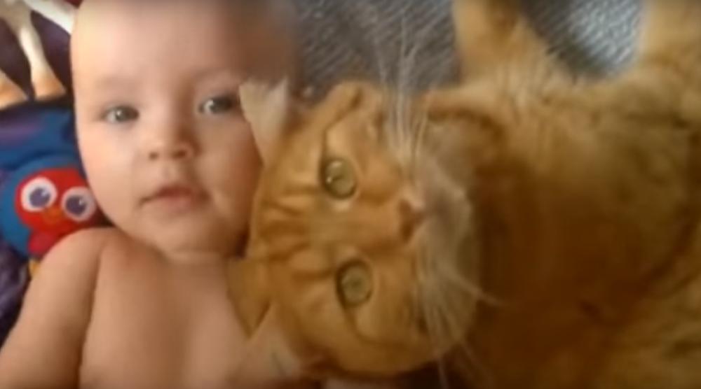 赤ちゃん好きな猫