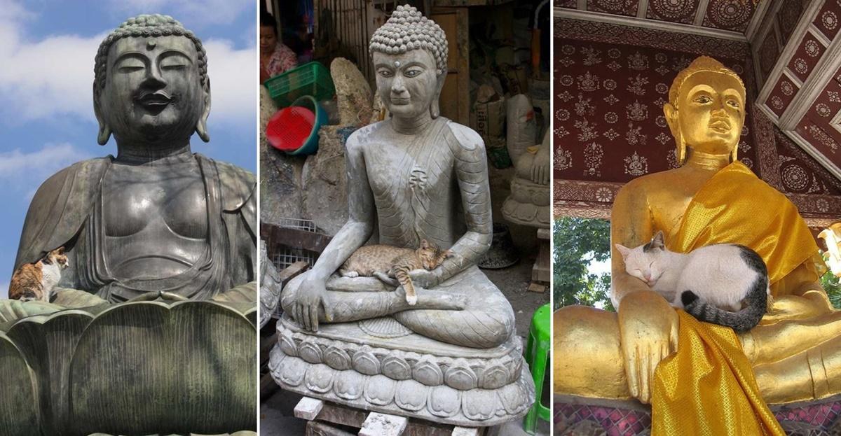 仏像と猫達