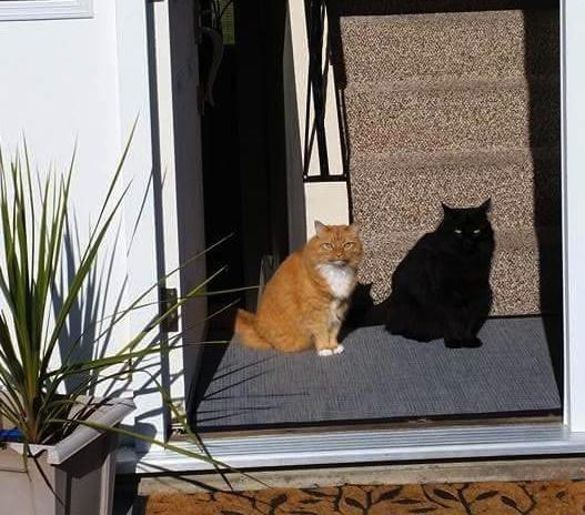 影のような黒猫