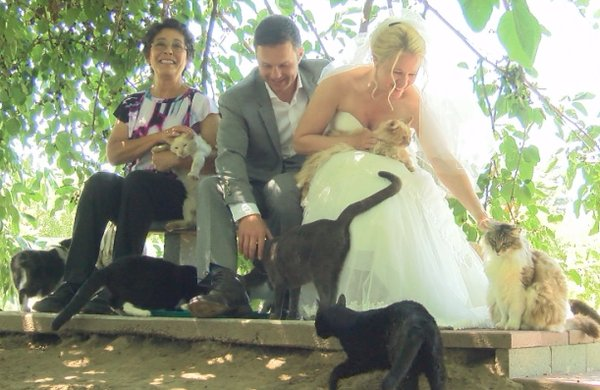 1000匹の猫達と結婚式!