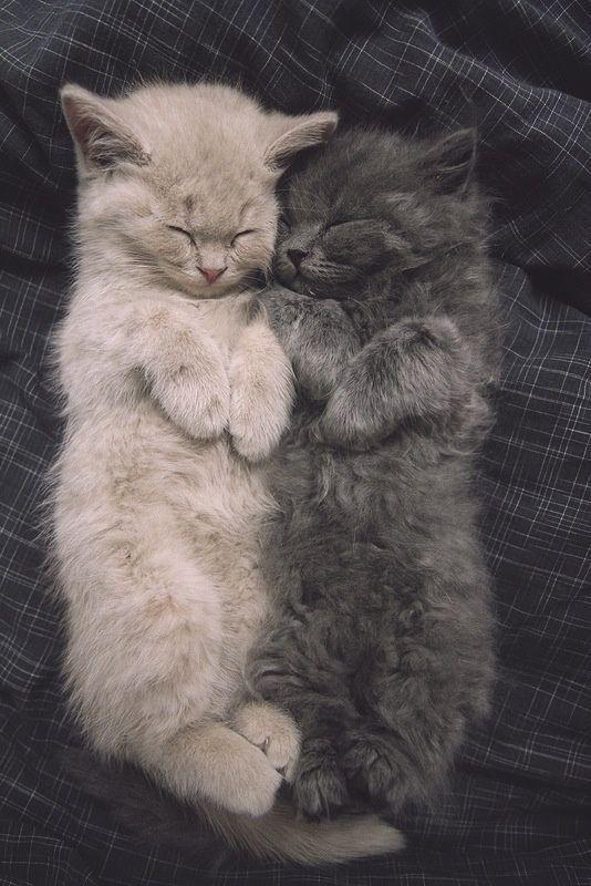 寝姿が一緒に二匹の子猫