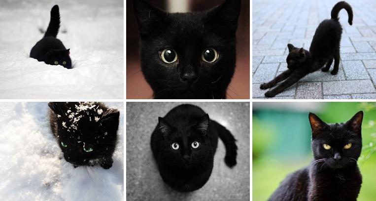 黒猫画像集