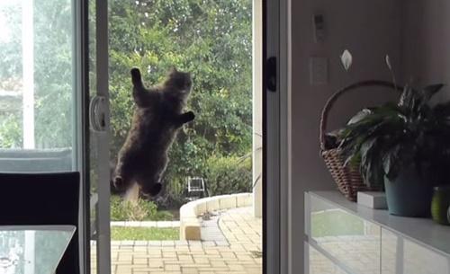 網戸から中をうかがう猫