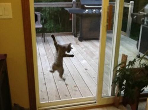 網戸に爪がひっかかる猫