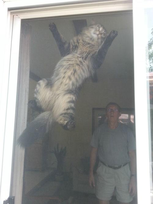 網戸にのぼる猫と愕然とする飼い主