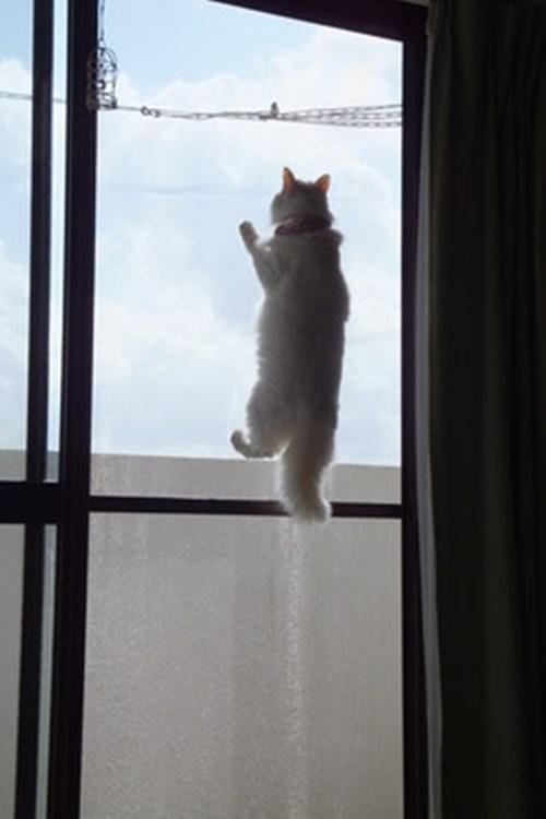 青空の網戸猫
