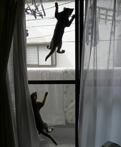 トカゲのような猫たち