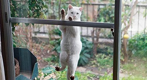 変な姿勢な猫