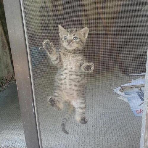 子猫も網戸