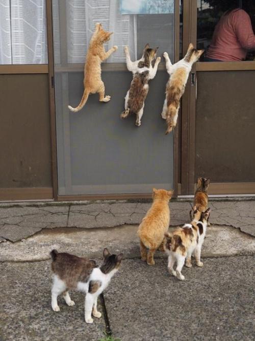 張り付きまくる猫