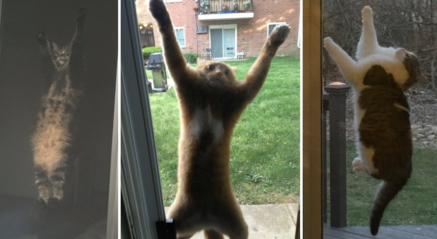 網戸に張り付く猫達の画像まとめ