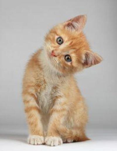 首をかしげる猫2