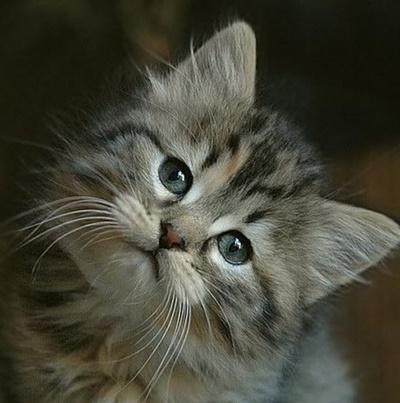 首をかしげる猫3