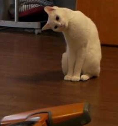 首をかしげる猫6