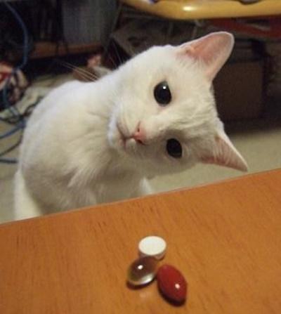 首をかしげる猫7