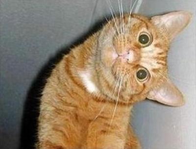 首をかしげる猫12