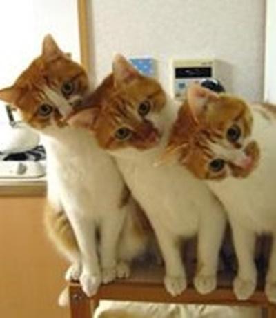 首をかしげる猫14