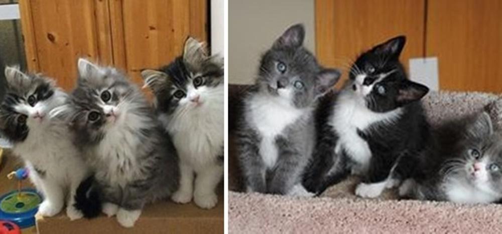 首をかしげる猫達の画像まとめ