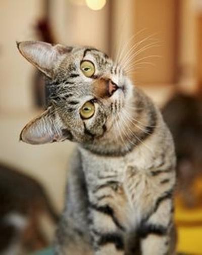 首をかしげる猫11