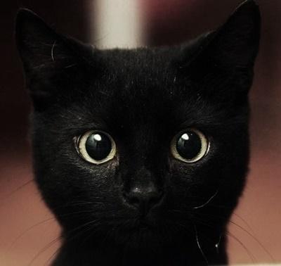 black002cat