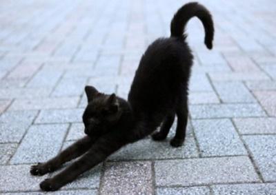 black003cat