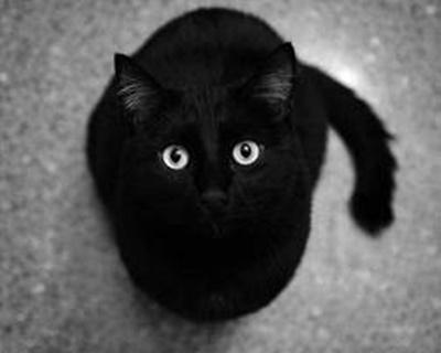black005cat