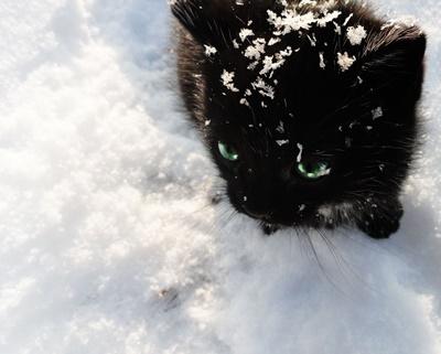 black006cat