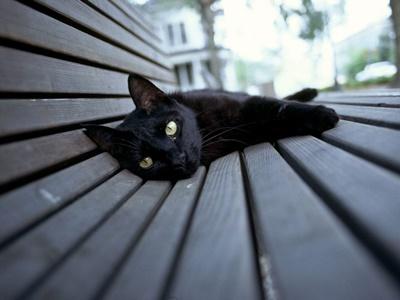 black007cat