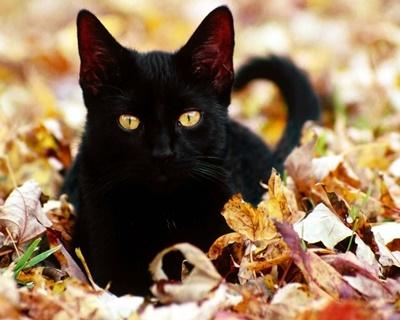 black009cat