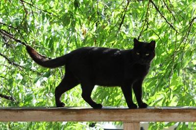 black010cat