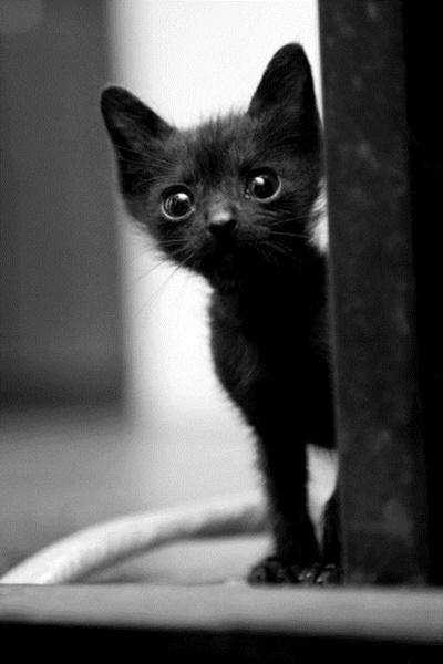 black011cat